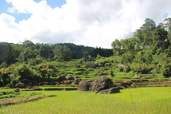 Rizières du Pays Toraja Sulawesi
