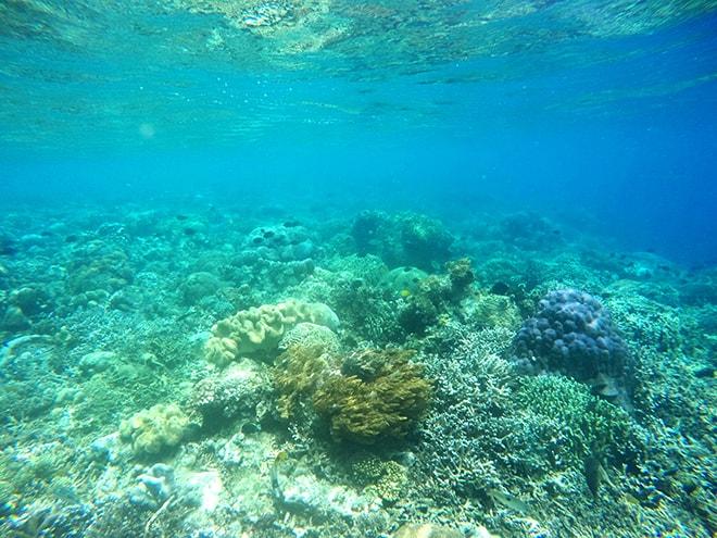 snorkeling bunaken sulawesi
