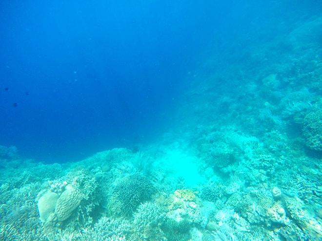 tombant snorkeling bunaken