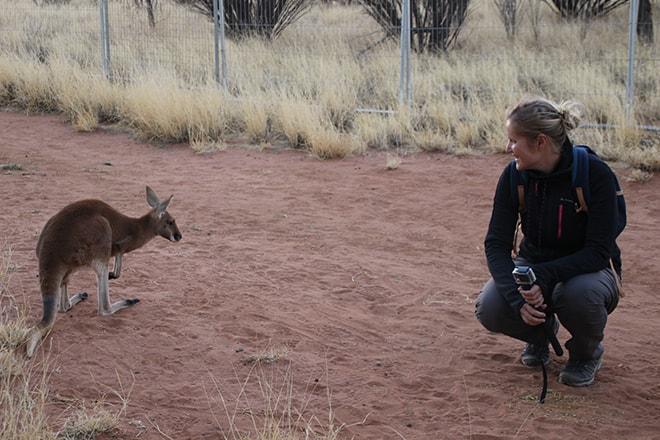 Approche de Kangourou Alice Springs