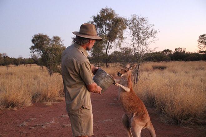 Kangourou et sa nourriture