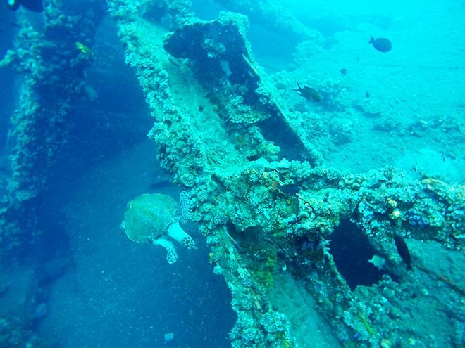Tortue plongee Tulamben Bali Yos Marine Epave Liberty plonger à Tulamben