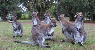 3 jours kangaroo island australie
