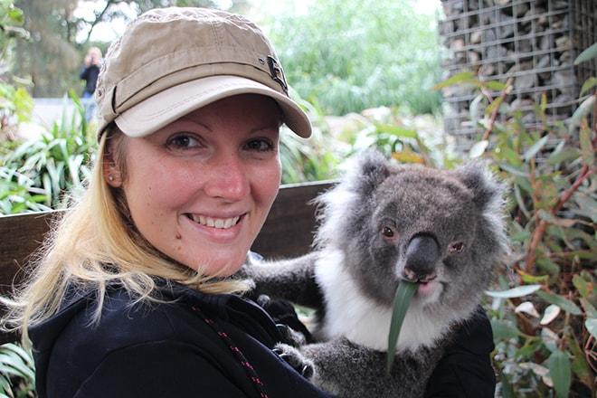 Elo koala Adelaide hills australie
