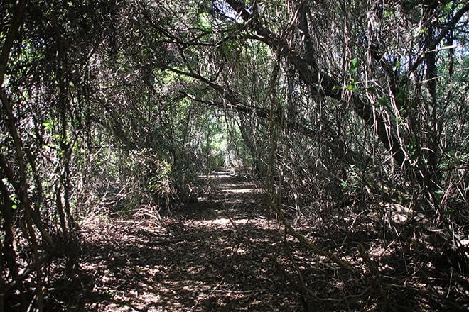 Gungarre Walk Kakadu