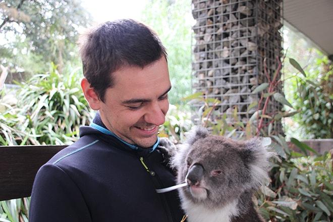 Tom Koala Adelaide Hills Australie