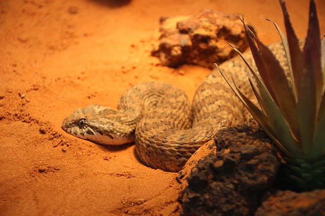 serpent Kangaroo Island Wildlife Park