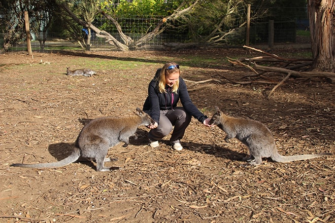 wallabies Kangaroo Island Wildlife Park