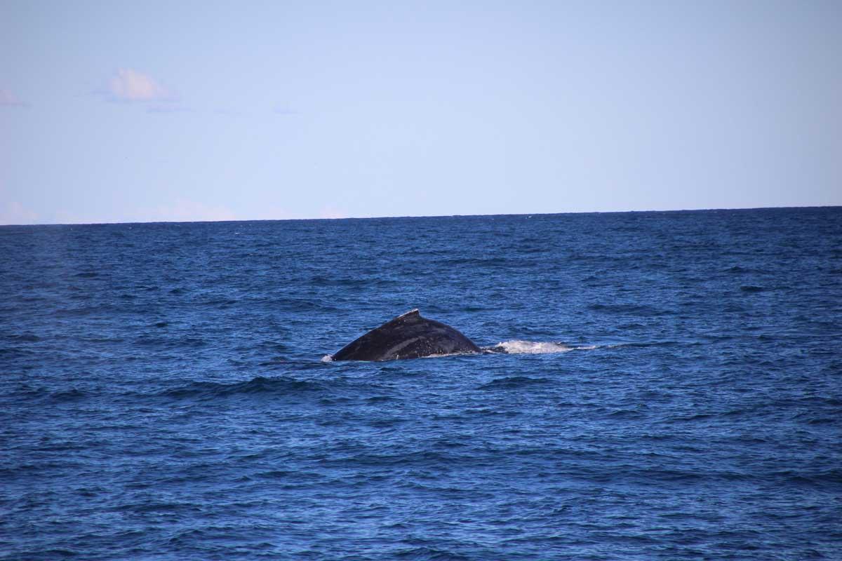 Baleine Sydney Australie