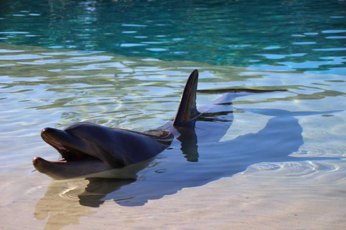 Dauphin SeaWorld Gold Coast Australie