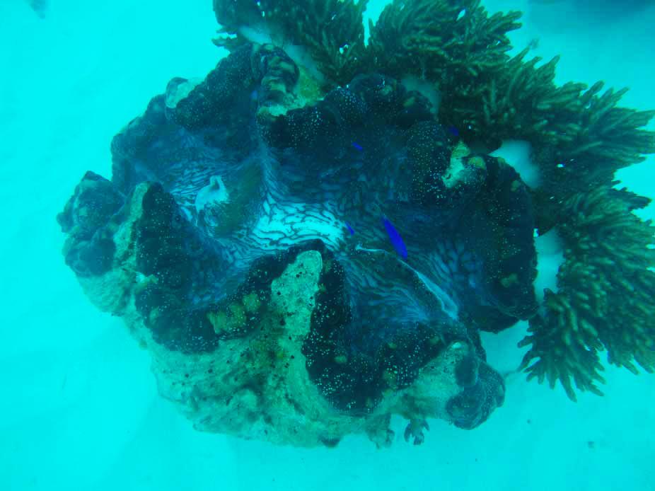 Grande Barrière de Corail Cairns Australie
