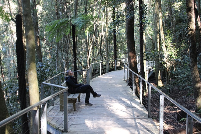 boardwalk foret blue mountains