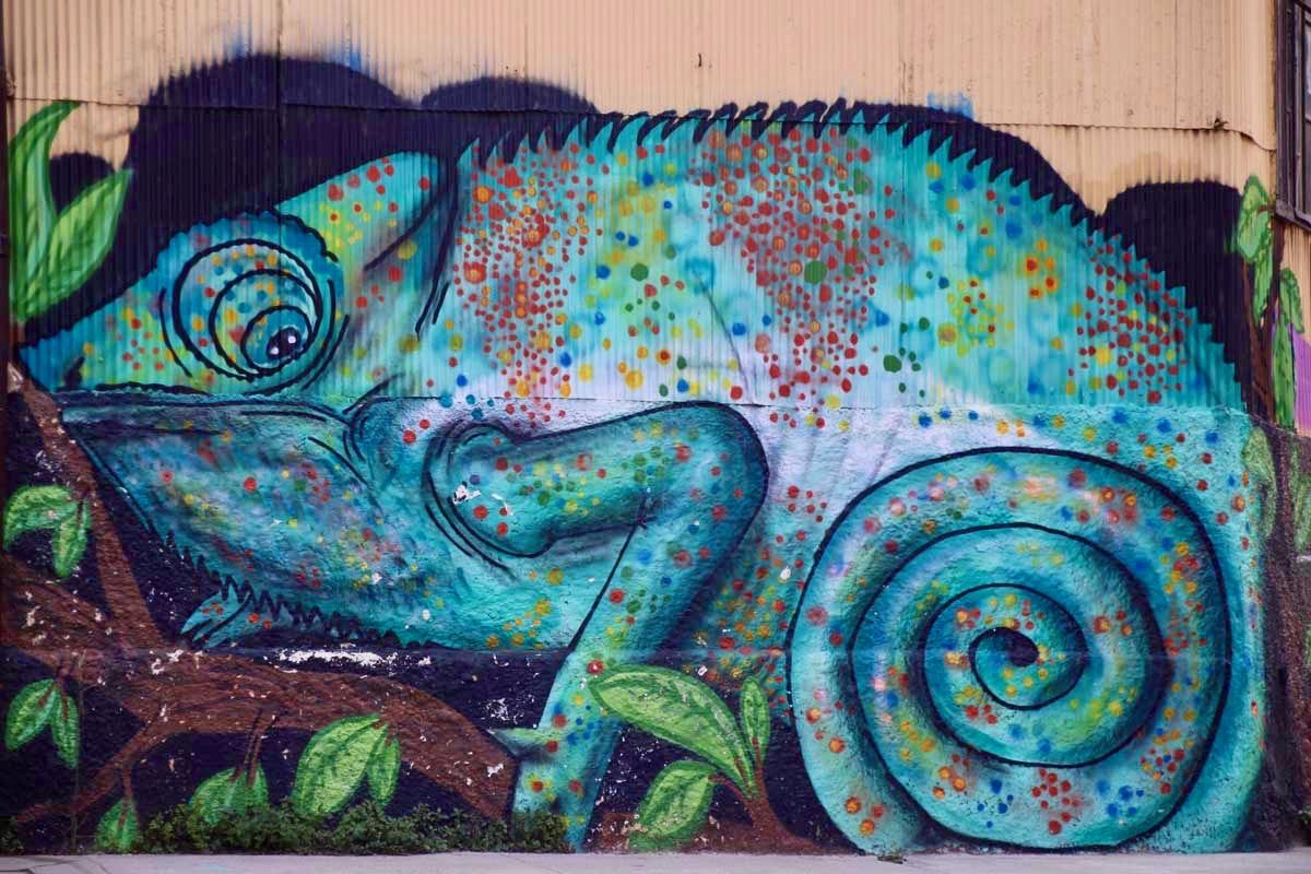 cameleon street art