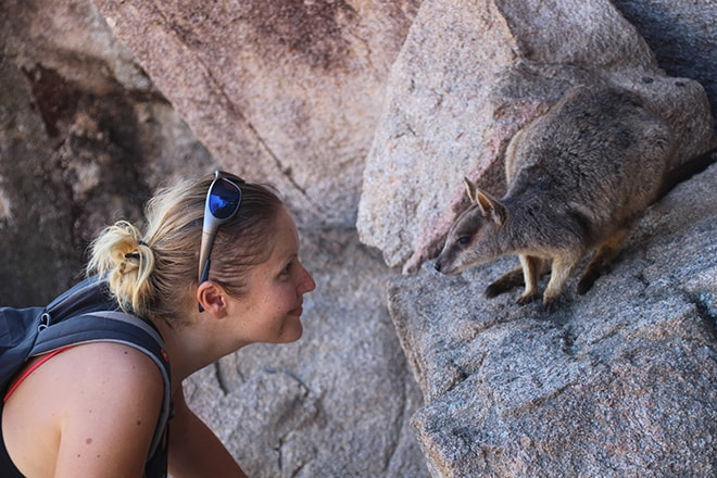 magnetic island wallaby rochers