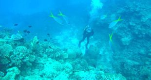 plongee sur la grande barriere de corail cairns