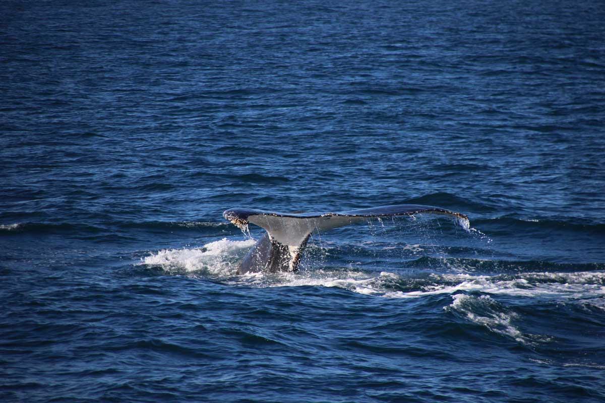 queue baleine Sydney Australie