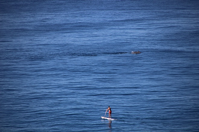Stand up paddle dauphins noosa