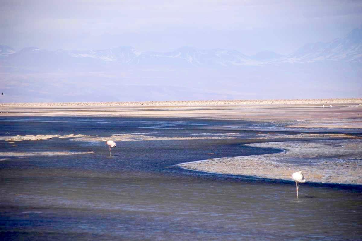 vue lagune flamands roses