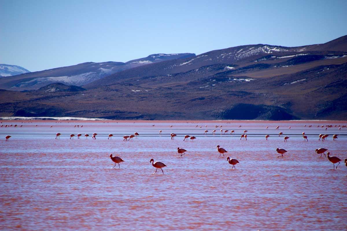 Laguna Colorada Sud Lipez