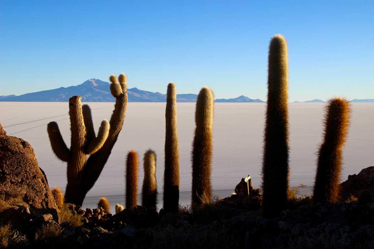 ile cactus salar uyuni