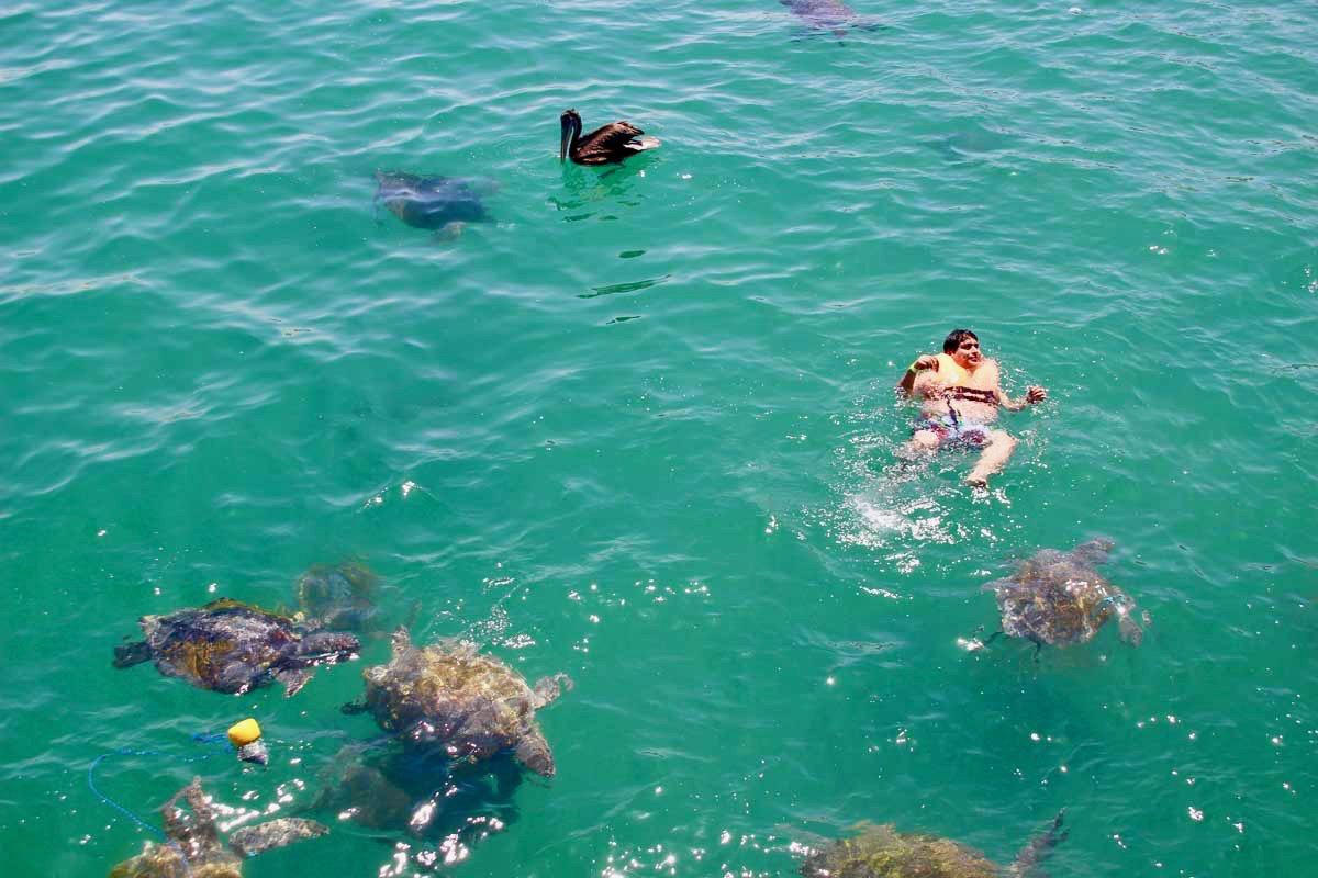 tourisme tortues mancora