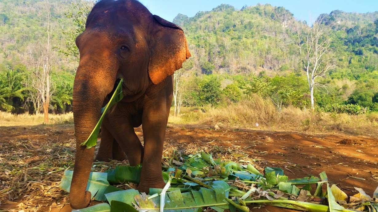 Volontariat elephants Thaïlande