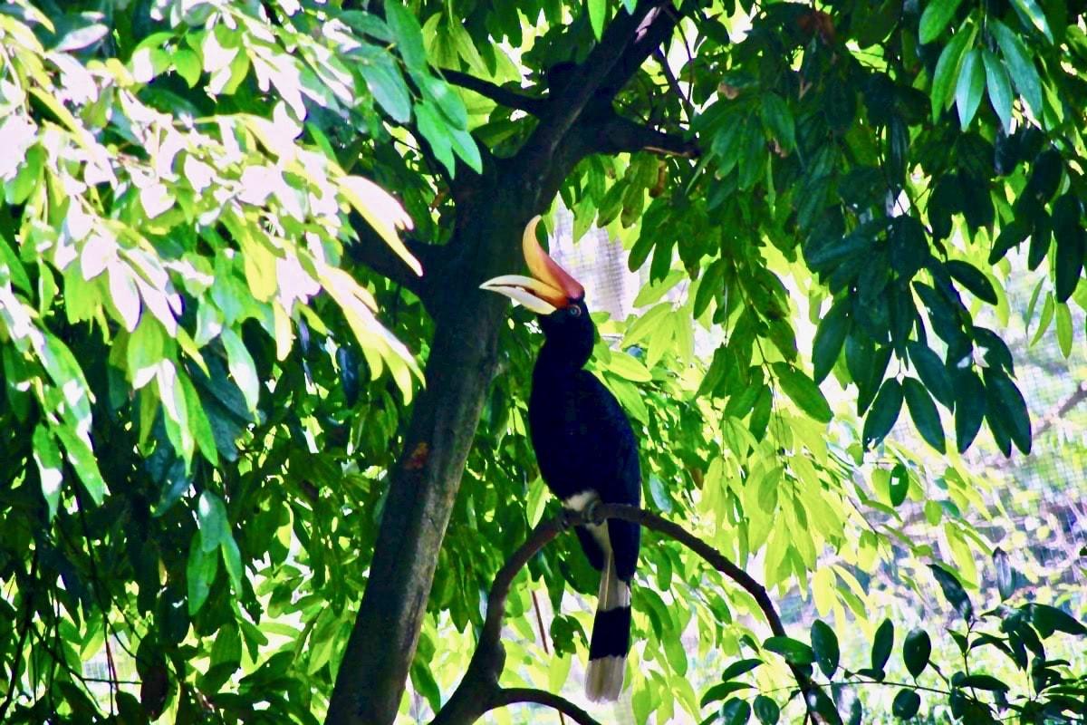 Hornbill KL Bird Park Kuala Lumpur