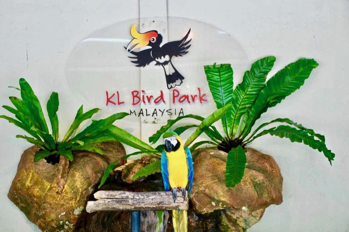 notre visite du kl bird park de kuala lumpur