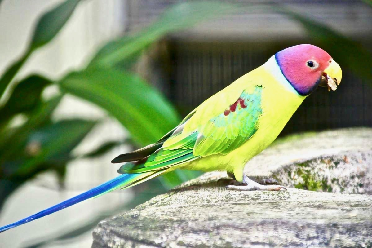 oiseau colore KL Bird Park Kuala Lumpur