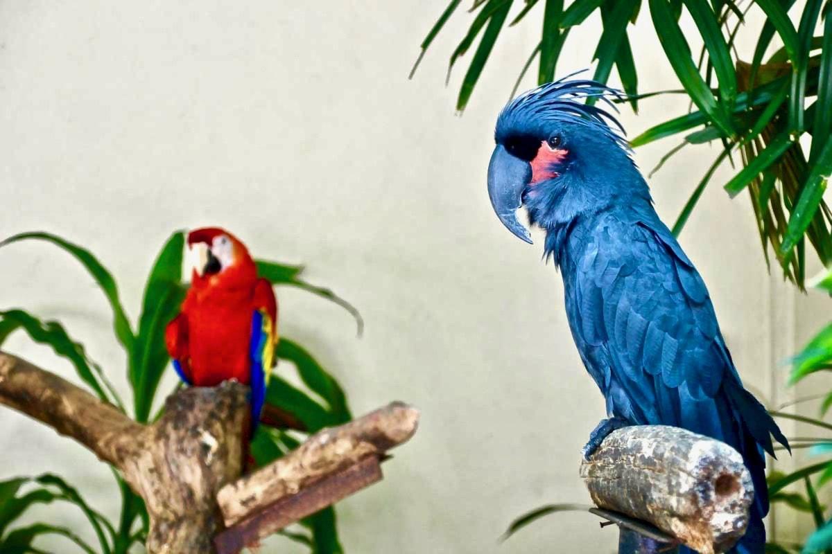 perroquet bleu KL Bird Park Kuala Lumpur