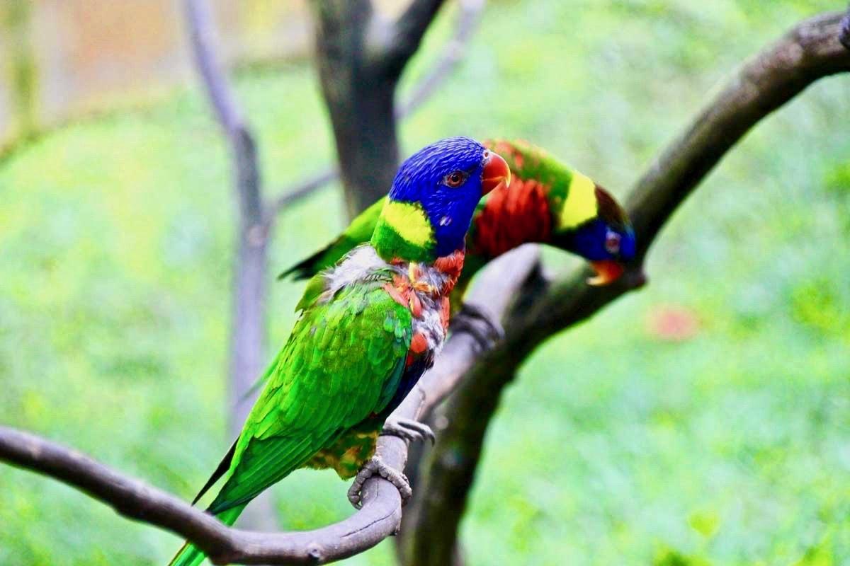 petit perroquet KL Bird Park Kuala Lumpur