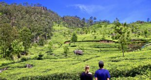5 jours montagnes plantations thé sri lanka