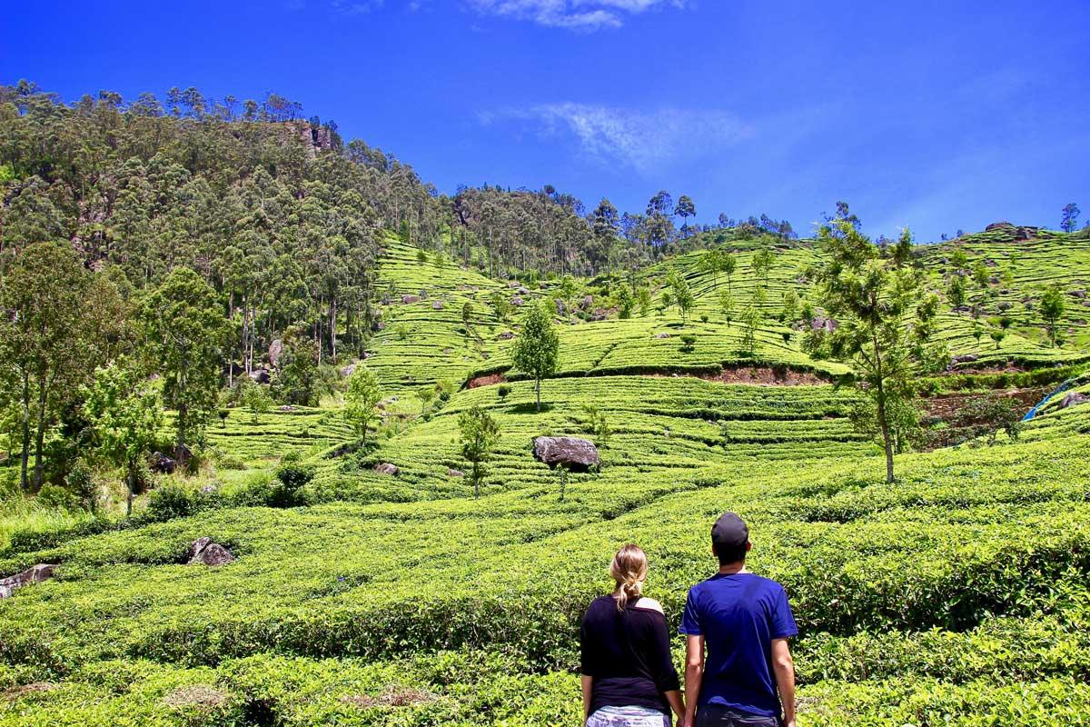 5 jours dans les montagnes et les plantations de thé au Sri Lanka