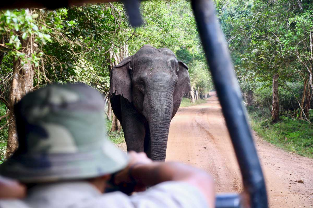 Guide photo elephant Safari Wilpattu National Park