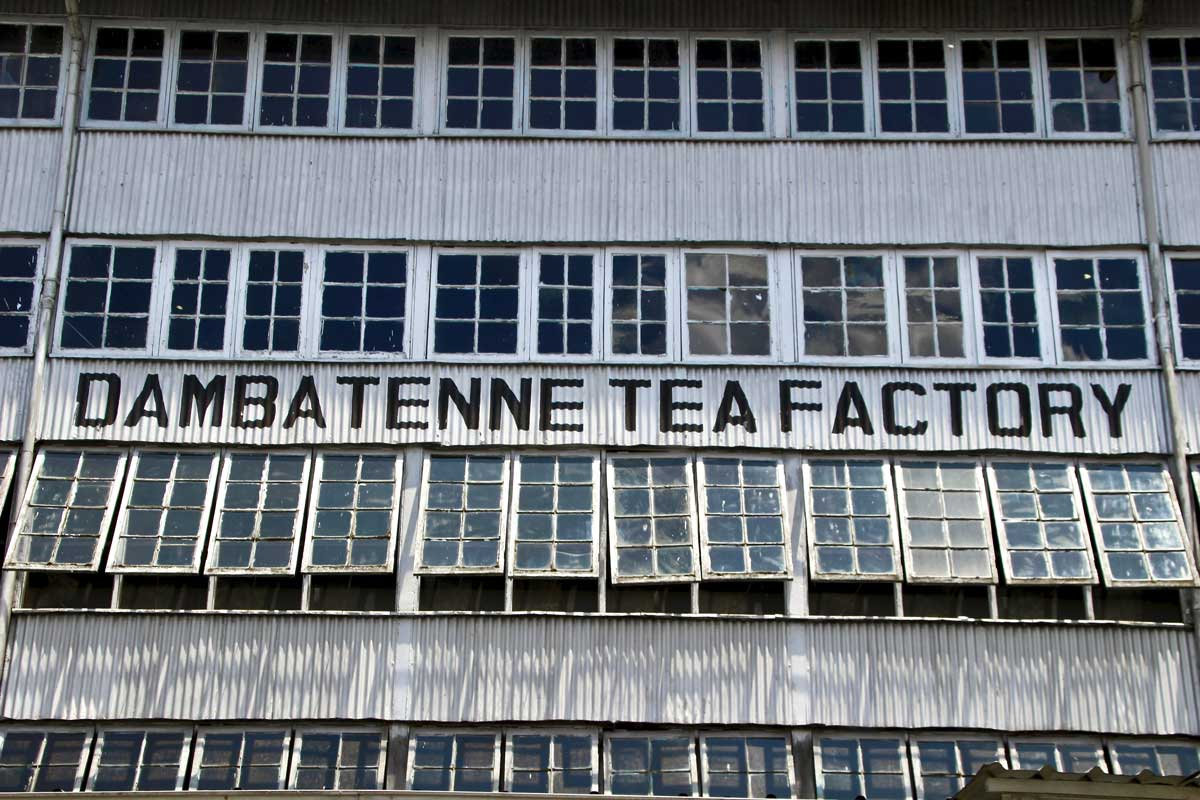 dambatenne tea factory haputale