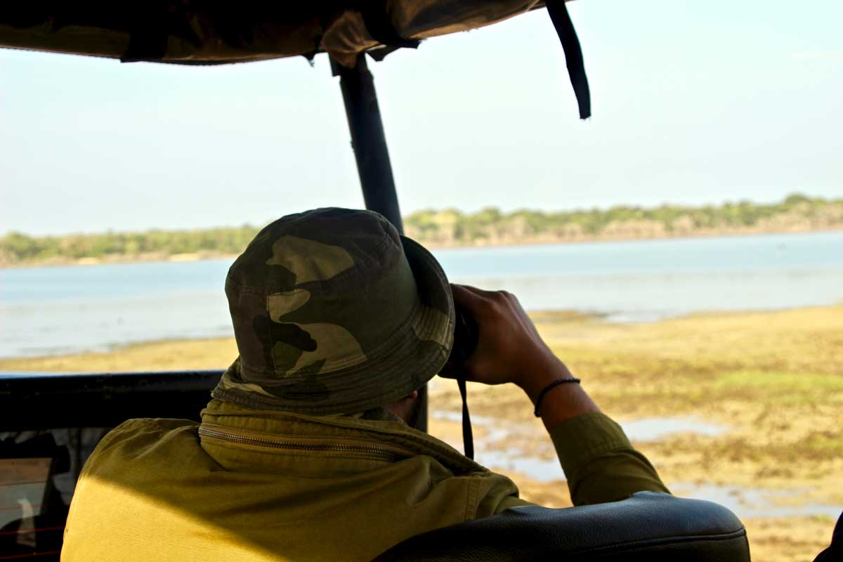 guide cherche Safari Wilpattu National Park