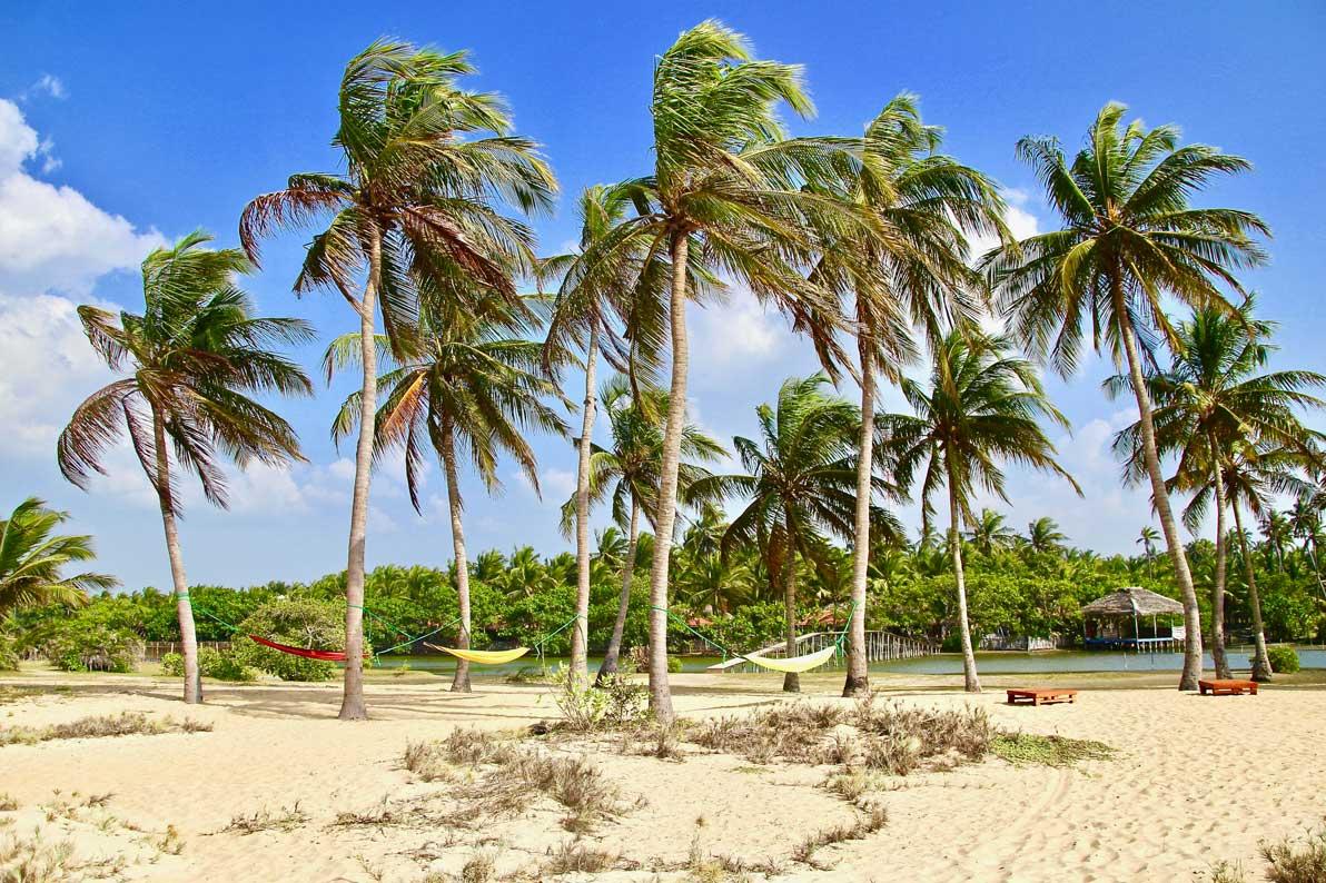 hamacs et cocotiers kite Surfing Lanka Kalpitiya