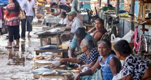 marché aux poisson negombo sri lanka