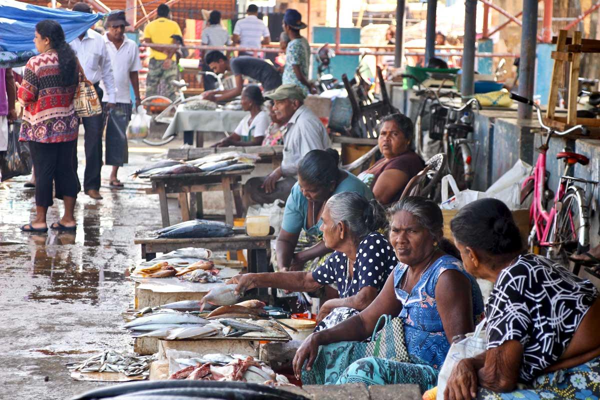 marché aux poissons negombo sri lanka