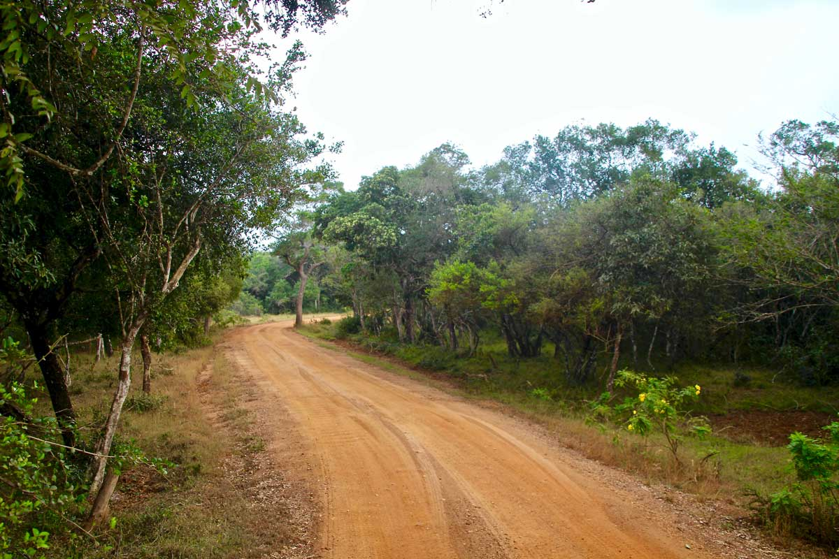 piste Safari Wilpattu National Park