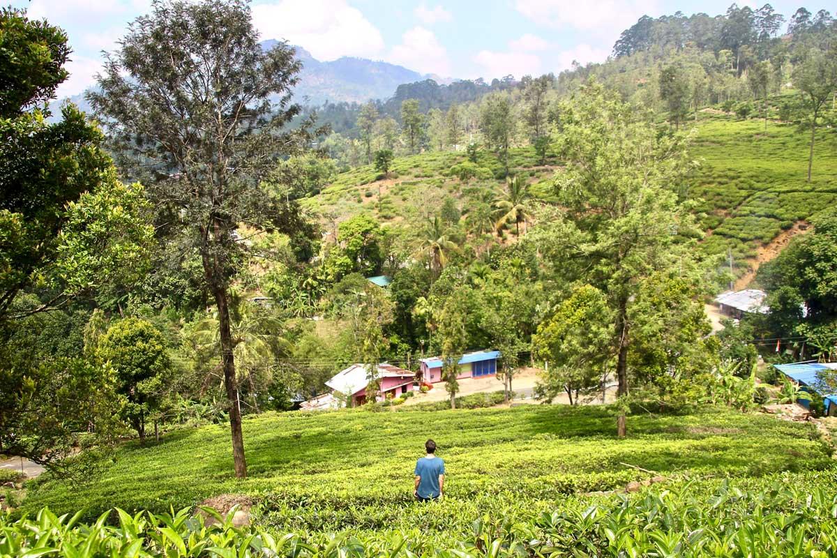plantations thé glenloch nuwara eliya sri lanka