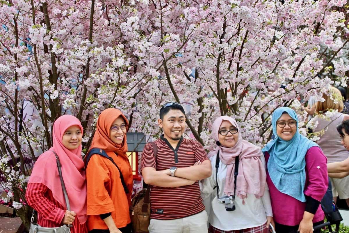 Cerisiers du japon Flower Dome Singapour