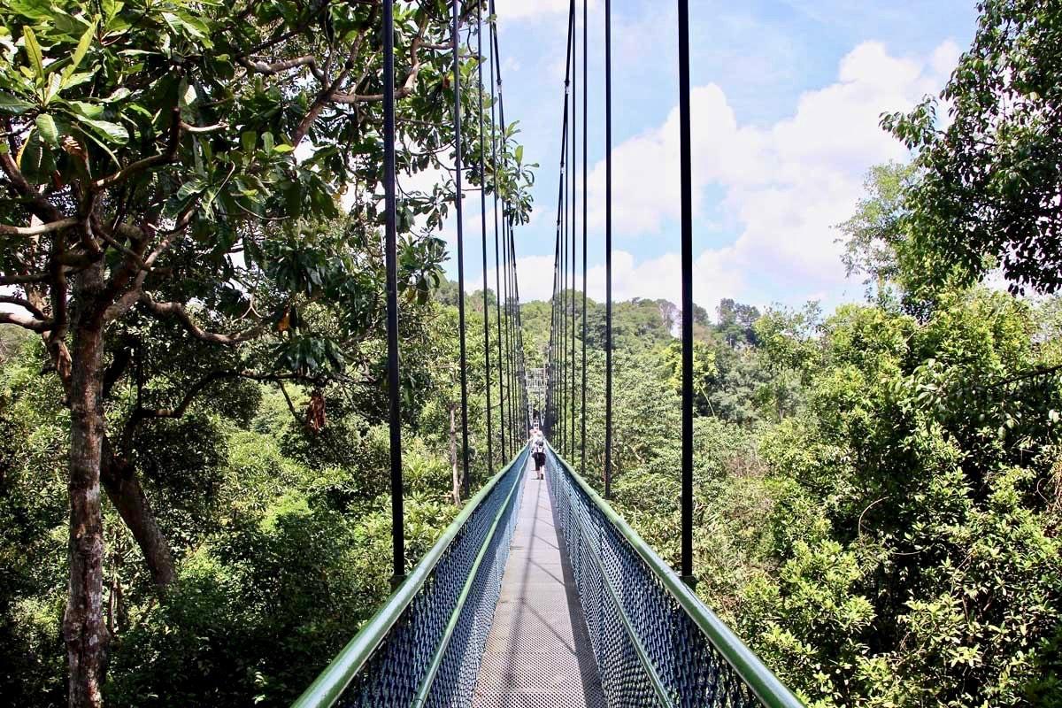 TreeTop Walk Singapour pont suspendu