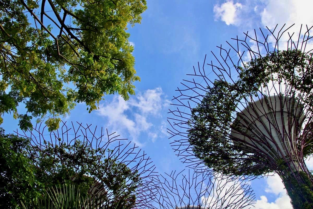 arbres du Gardens by the Bay Singapour