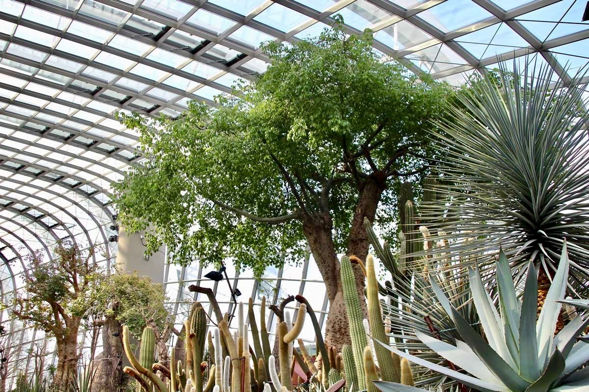 baobabs Flower Dome Singapour
