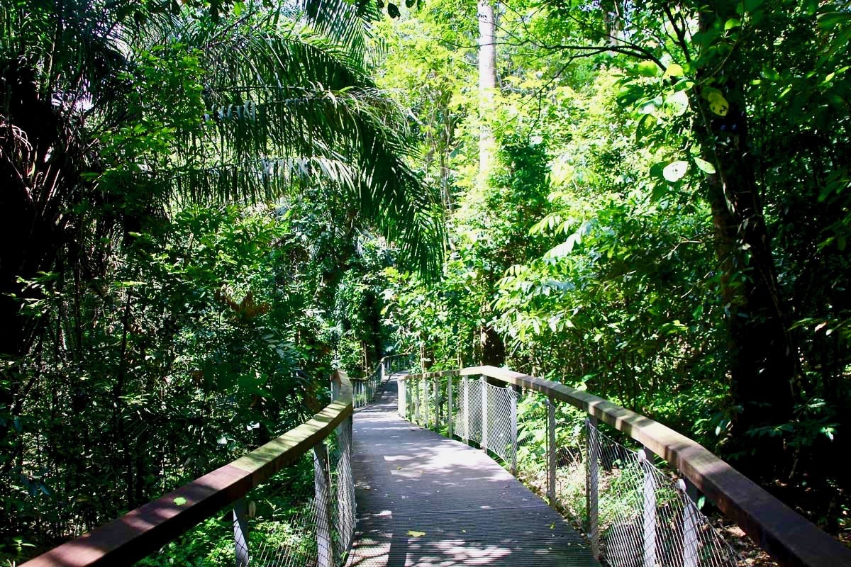 boardwalk macritchie reservoir