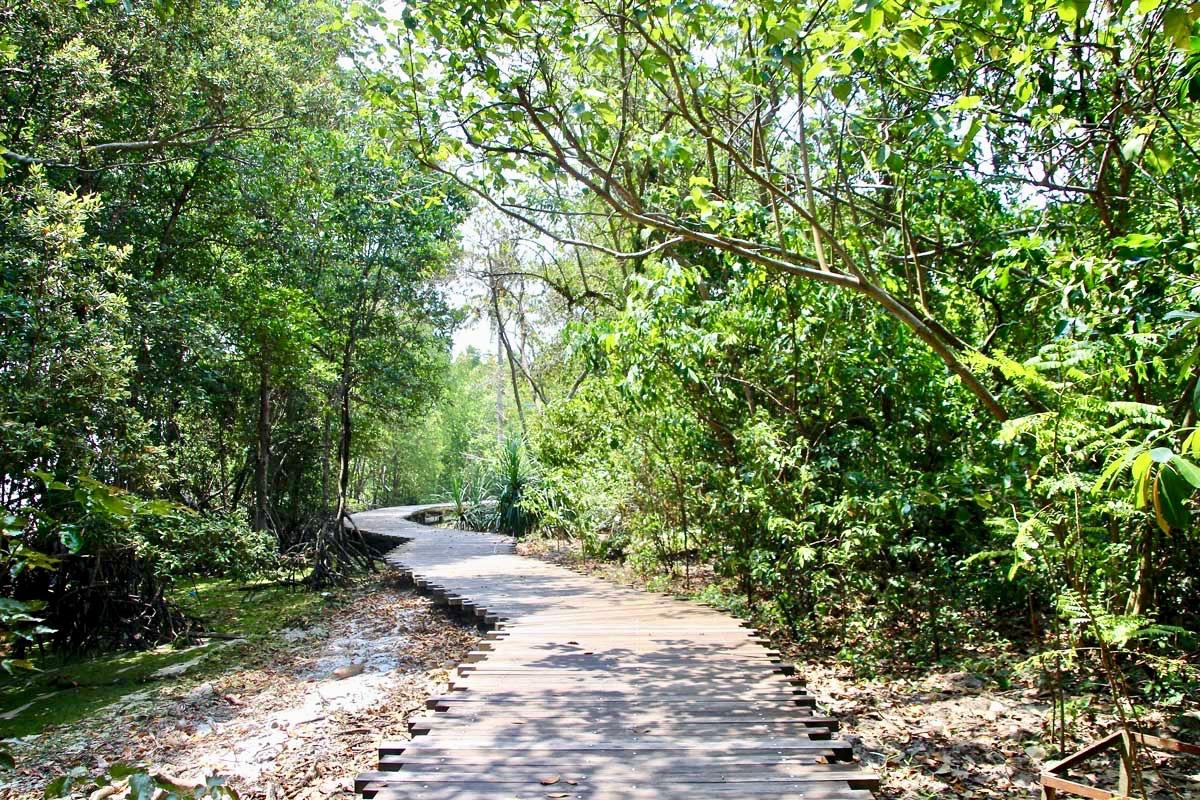 boardwalk mangrove Pulau Ubin Singapour