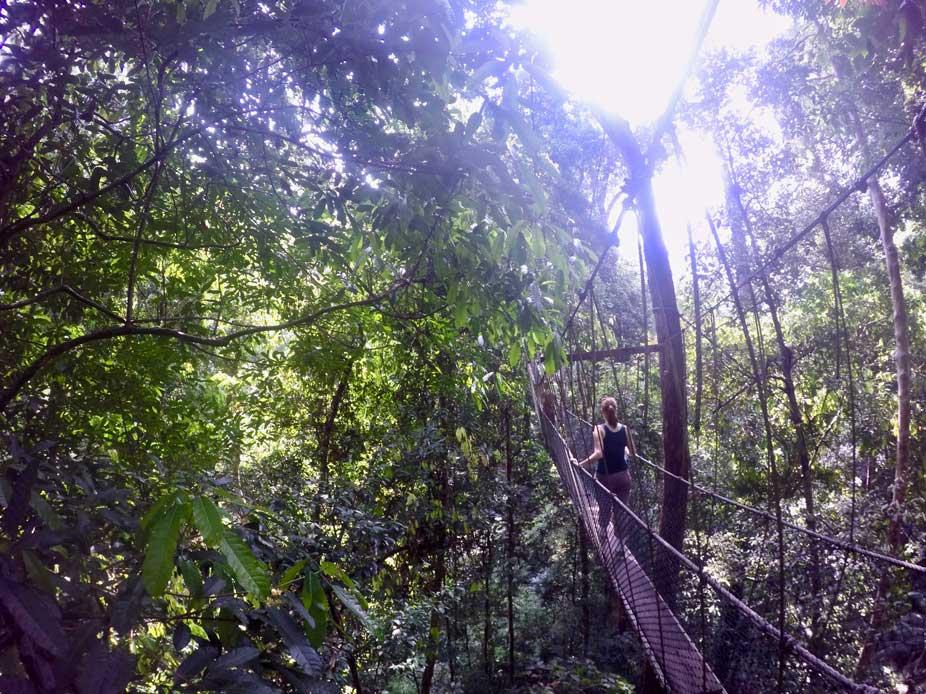 taman negara canopy walk