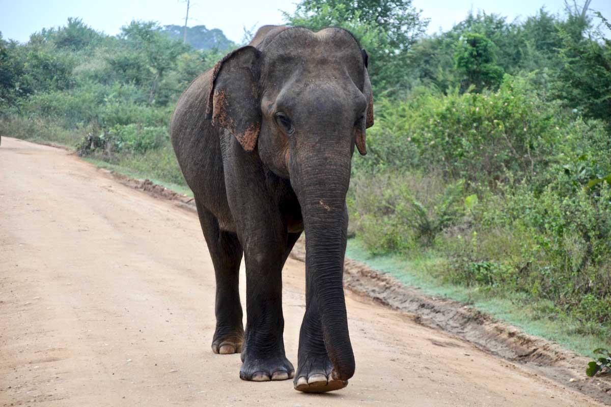 Notre Safari à Udawalawe : voir des éléphants et plein d'autres animaux !