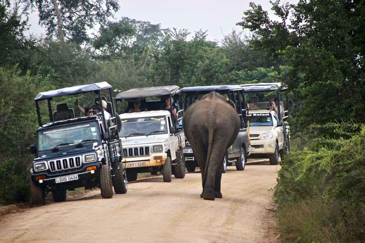 elephant sur la piste et jeep